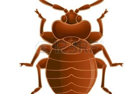 Bed Bugs in Bernards