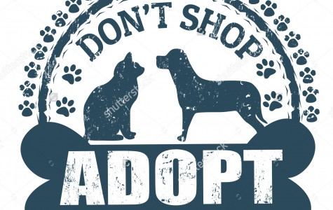 5 Reasons to Adopt from a Shelter